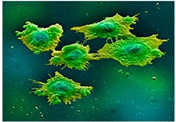 Днк mycoplasma hominis