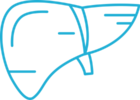 Схематическое изображение печени